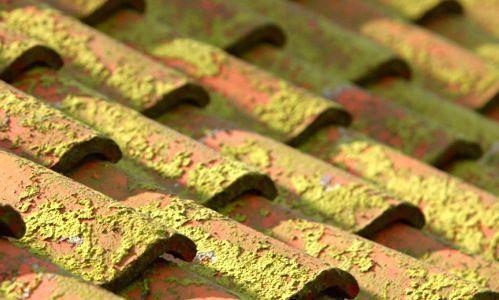 Nettoyant pour toiture Algimouss